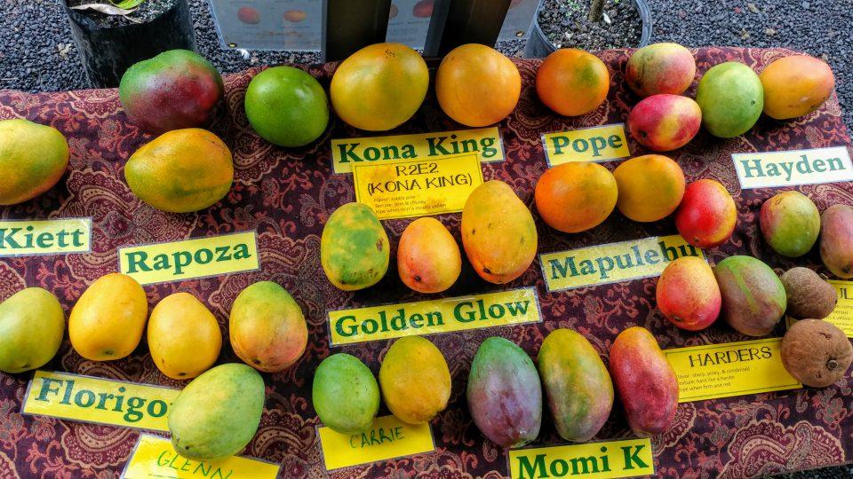 Delhi Gets Ready for 31st Mango Festival
