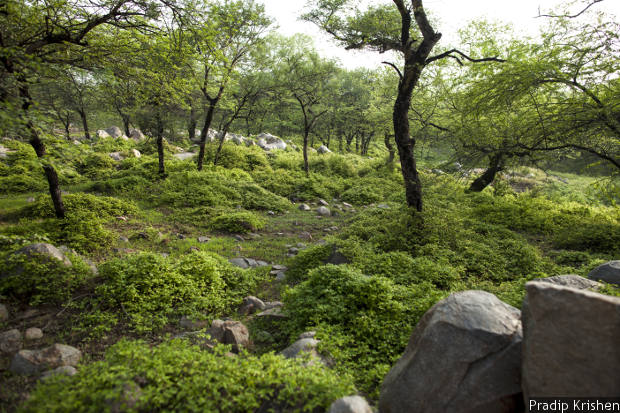 Aravalli Forests