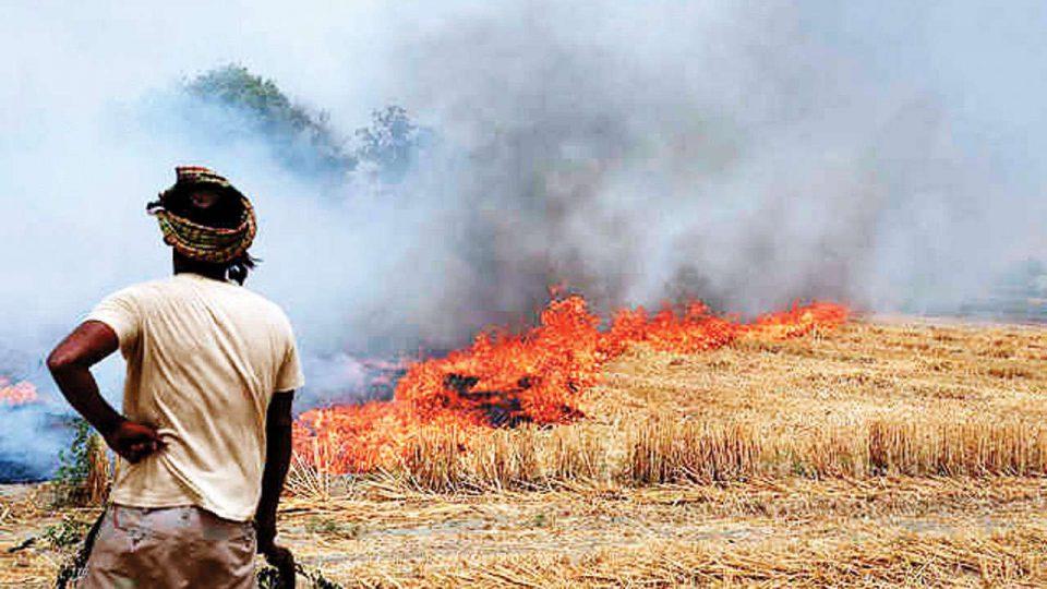 NGT asks UP, Haryana and Punjab to Monitor stubble burning