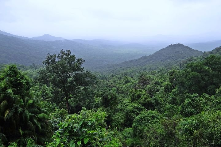 India's Forest Cover Rises